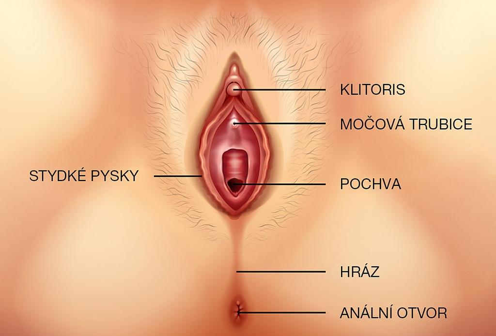 Klitois